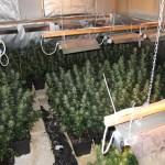 Drogenfarm in Halle Westfalen entdeckt