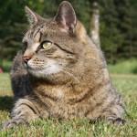 Tipps für Katzen- und Gartenbesitzer