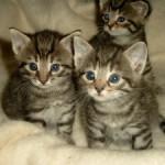 Mehrere Fundkatzen in Versmold