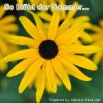 So blüht der Sommer...